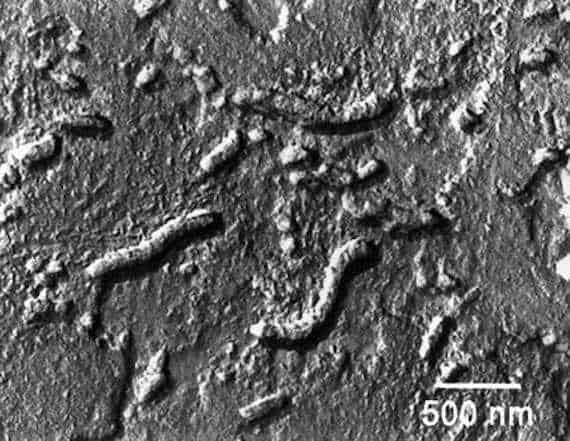 Изображение подозреваемых окаменелых марсианских микробов