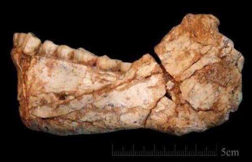челюсть древнего человека