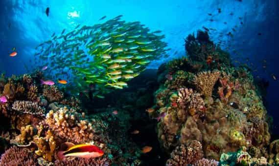 рифы возле Австралии