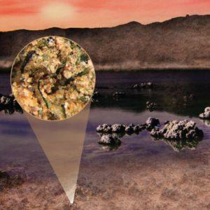 Насыщение азотом древних океанов Земли