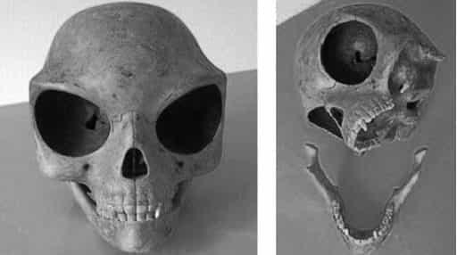 череп инопланетянина