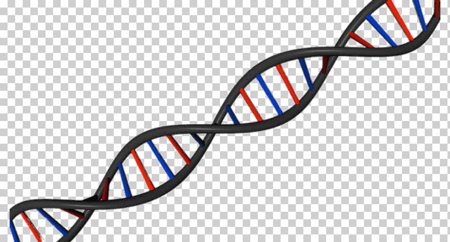 Двойная спирать ДНК