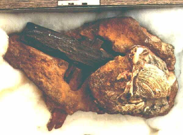 молоток в скале возрастом 400 миллионов лет