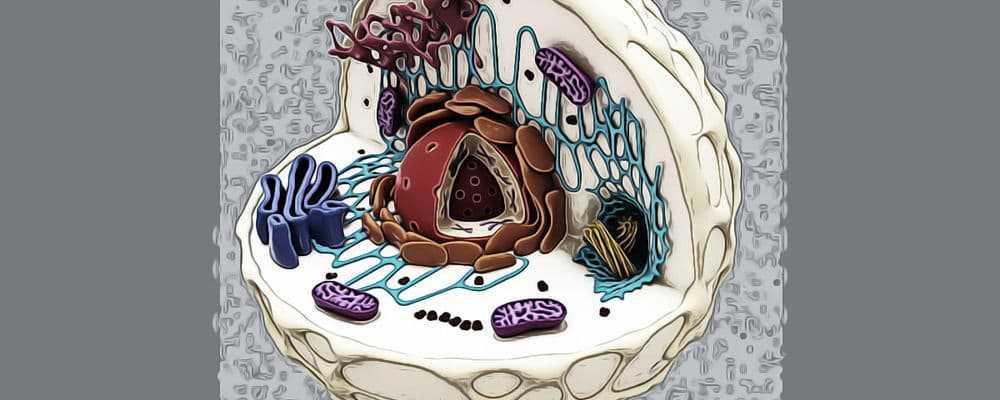 биохимия без кислорода