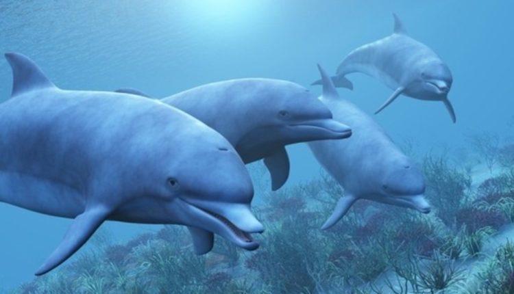 дельфины биолокация