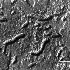 Спор о марсианских окаменелостях