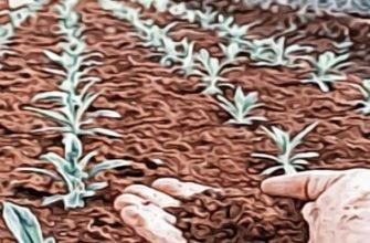 растения и марсианский грунт