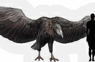 огромные птицы