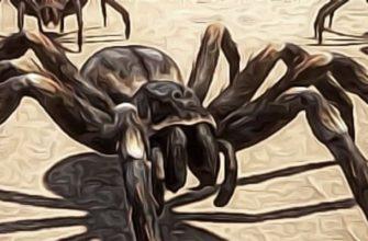 тайна Марсианских пауков