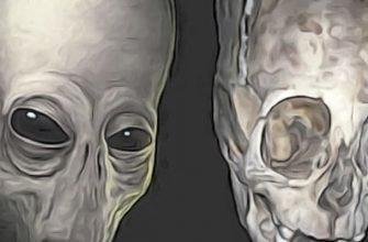 культура Паракас черепа