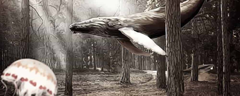 кит в лесу
