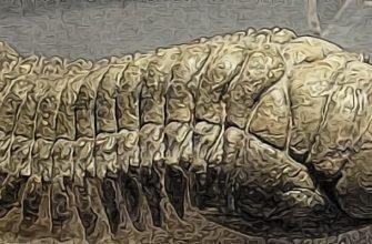 ископаемые трилобиты