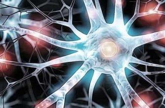 человеческий мозг загадка