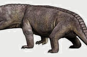 животные до динозавров