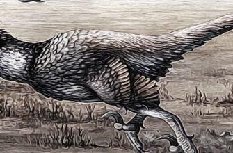 птицы-динозавры