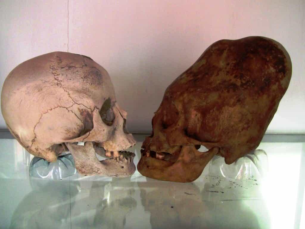 черепа Паракаса